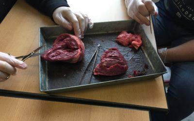 Herzpräparation in der 10e