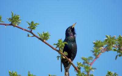 Naturtagebuch 2 – Vögel