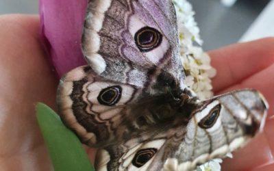 Naturtagebuch 4 – Die ersten Schmetterlinge