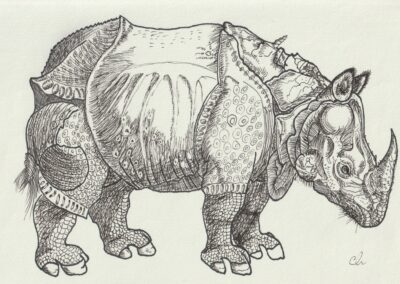 Rhinozerus nach Dürer, Emil Huppertsberg, 5a
