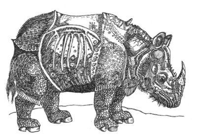 Rhinozerus nach Dürer, Nilklas Müller, 5f